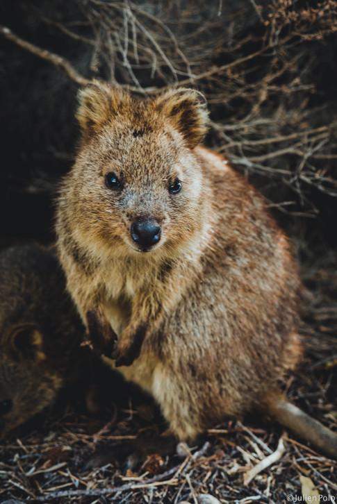 Rottnest Island (Australie)