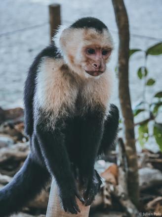 Manuel Antonio National Park (Costa Rica)