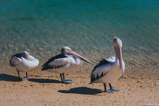 Maya Bay (Australie)