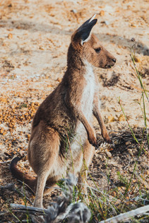 Lucky Bay (Australie)