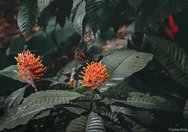 Uvita (Costa Rica)