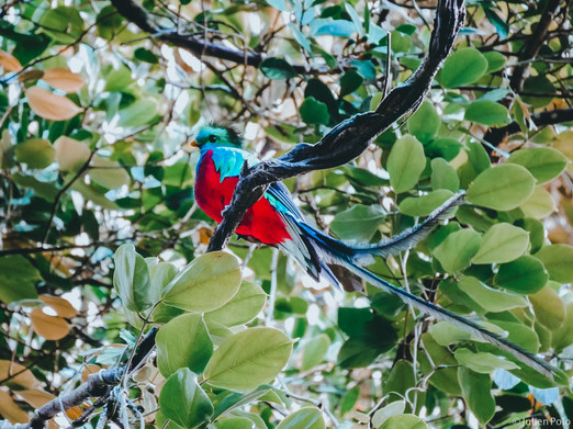 Monteverde (Costa Rica)