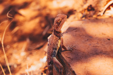 Karijini National Park (Australie)
