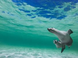 Jurien Bay (Australie)