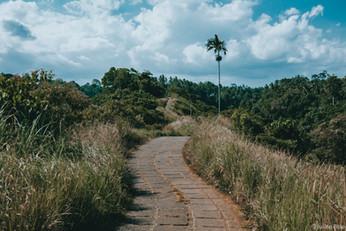 Campuhan Ridge Walk - Ubud