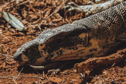 Tamborine National Park (Australie)