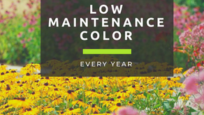 Low Maintenance Color