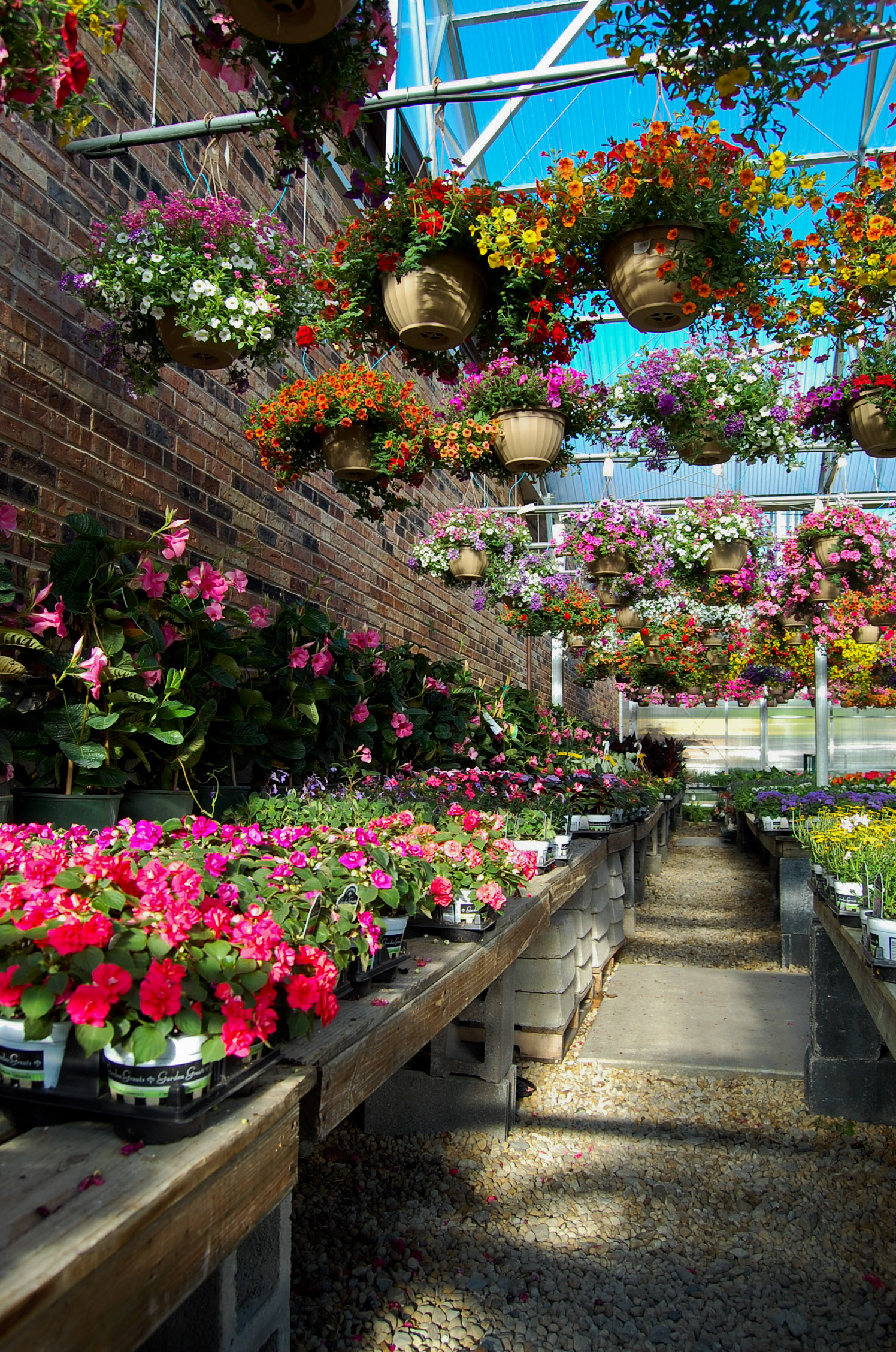 hanging baskets (7)