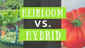 Heirloom Vs. Hybrid