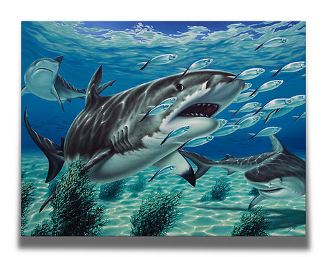 Tiger Shark Gallery-Wrapped Canvas Print