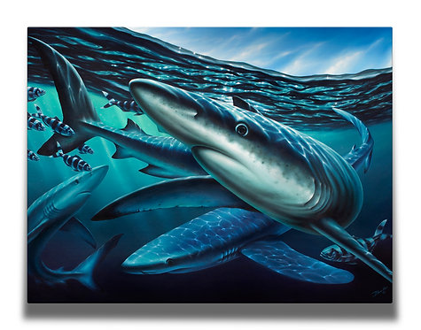 Blue Shark Gallery-Wrapped Canvas Print