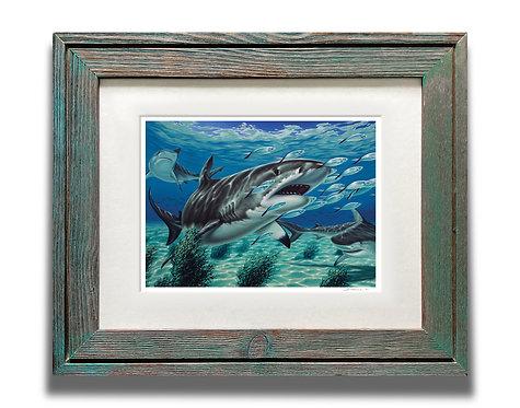Framed Tiger Shark Art Print