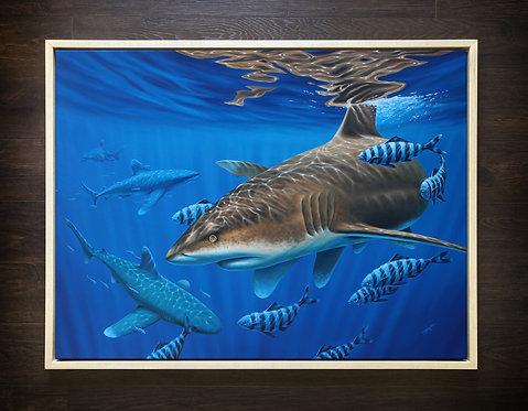 ORIGINAL Oceanic Whitetip Shark Oil Painting