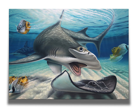 Hammerhead Gallery-Wrapped Canvas Print