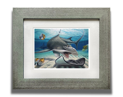 Framed Great Hammerhead Art Print