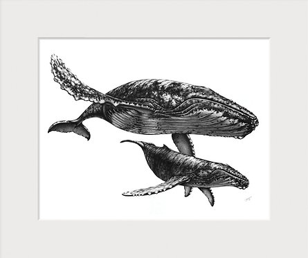 Humpback Whales Drawing Art Print