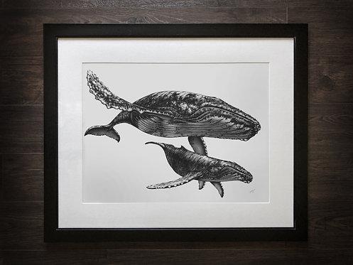 ORIGINAL Humpback Whales Graphite Drawing