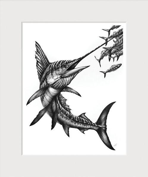 Sailfish Drawing Art Print