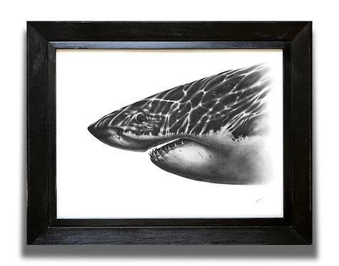 ORIGINAL Great White Shark Drawing