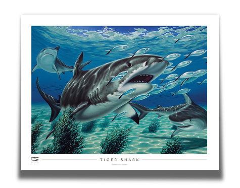 """Tiger Shark 28"""" x 22"""" Poster"""