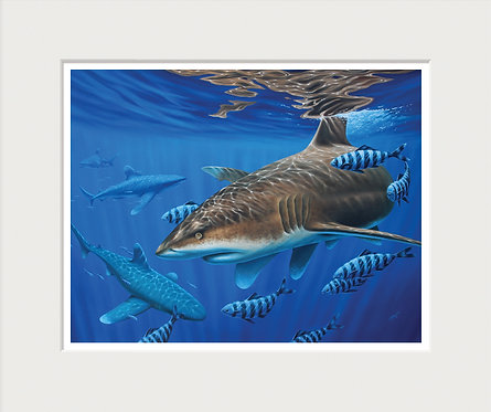 Oceanic Whitetip Shark Art Print