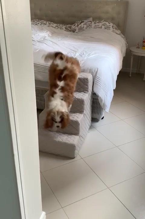 Vídeo Escadinha para Pets - G
