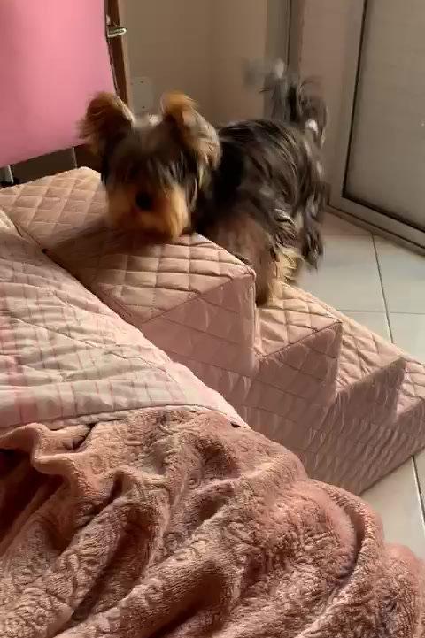 Vídeo - Escadinha para Pets, com antiderrapante - G