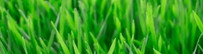 Grass_narrow_edited.jpg