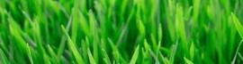 Grass_narrow_edited.jpg