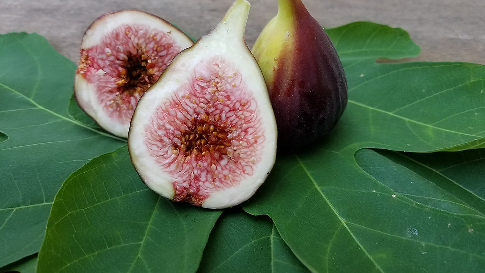 Brown Turkey Figs by the pound