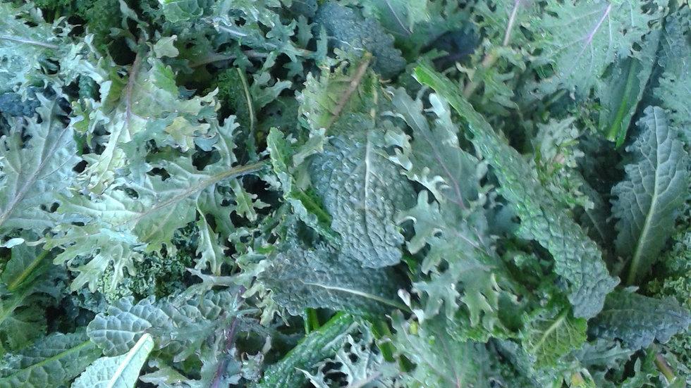 Seasonal Kale by the pound