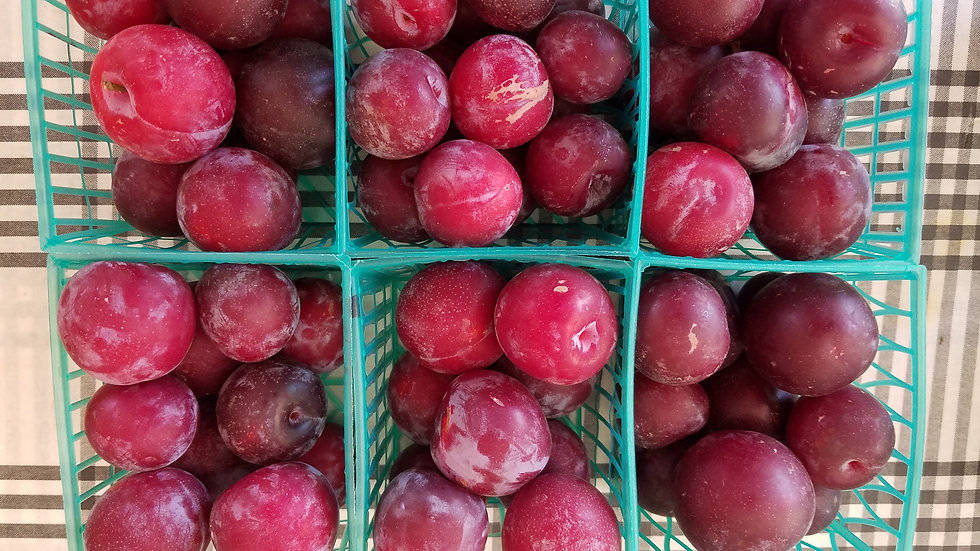 Santa Rosa Plums by the pound