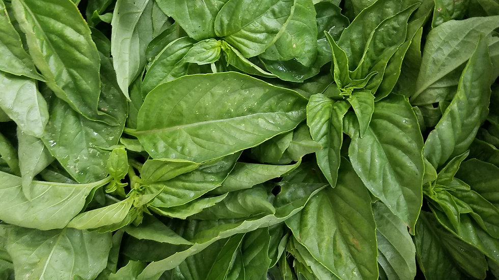 Fresh Basil by the bunch
