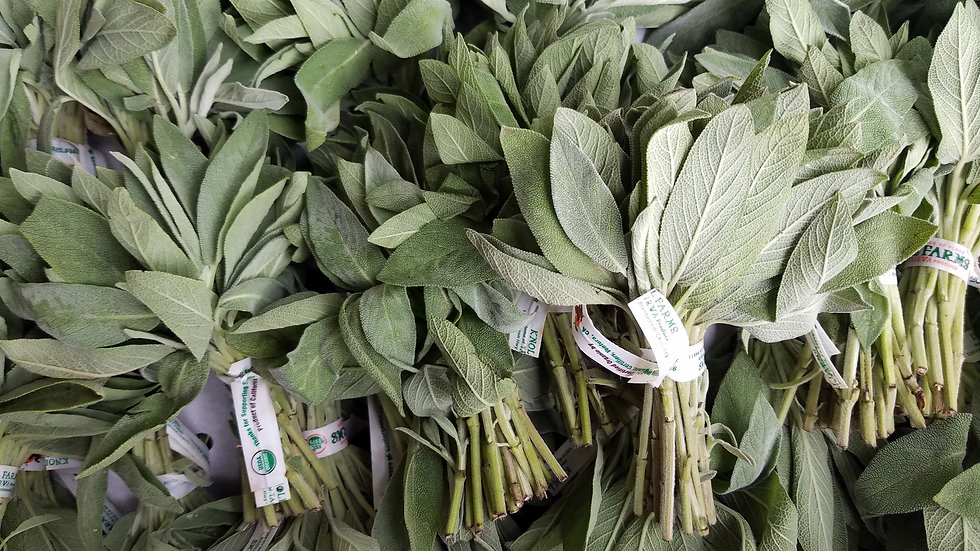 Fresh Sage by the bunch