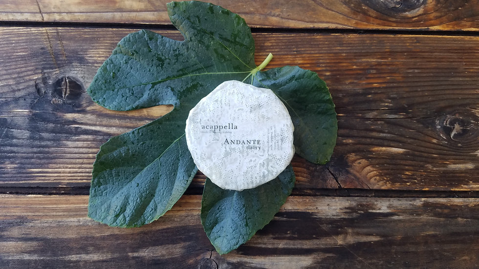 Acapella Goat Cheese by Andante Dairy