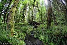 GEO 103-02 Quiz on Forests: Friday, April 27.
