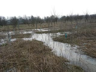 Schimbarile climatice, un adevarat pericol pentru agricultori!
