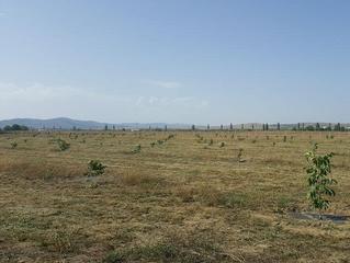 Infiintarea plantatiilor pomicole
