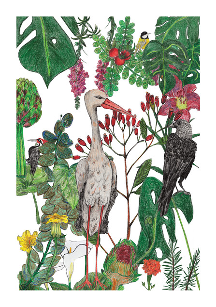 """Stork"" - Most popular print. Polish birds (woodpecker, tomtit, crow, stork), mixed with botanical beauties (zucchini flowers, carnation, monstera, acacia leaves). Each element was drawn separately by color pencils on paper, then scanned, cut out in Photoshop and put together as a collage. 2017"