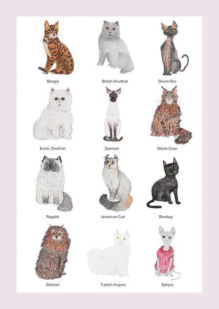 """Cats"" - Poster presenting selected cat breeds.  I made it for my exhibition in London in Circus West Village. Each cat was drawn separately in a sketchbook and scanned, cut out in Photoshop and put together as a one piece. 2017"