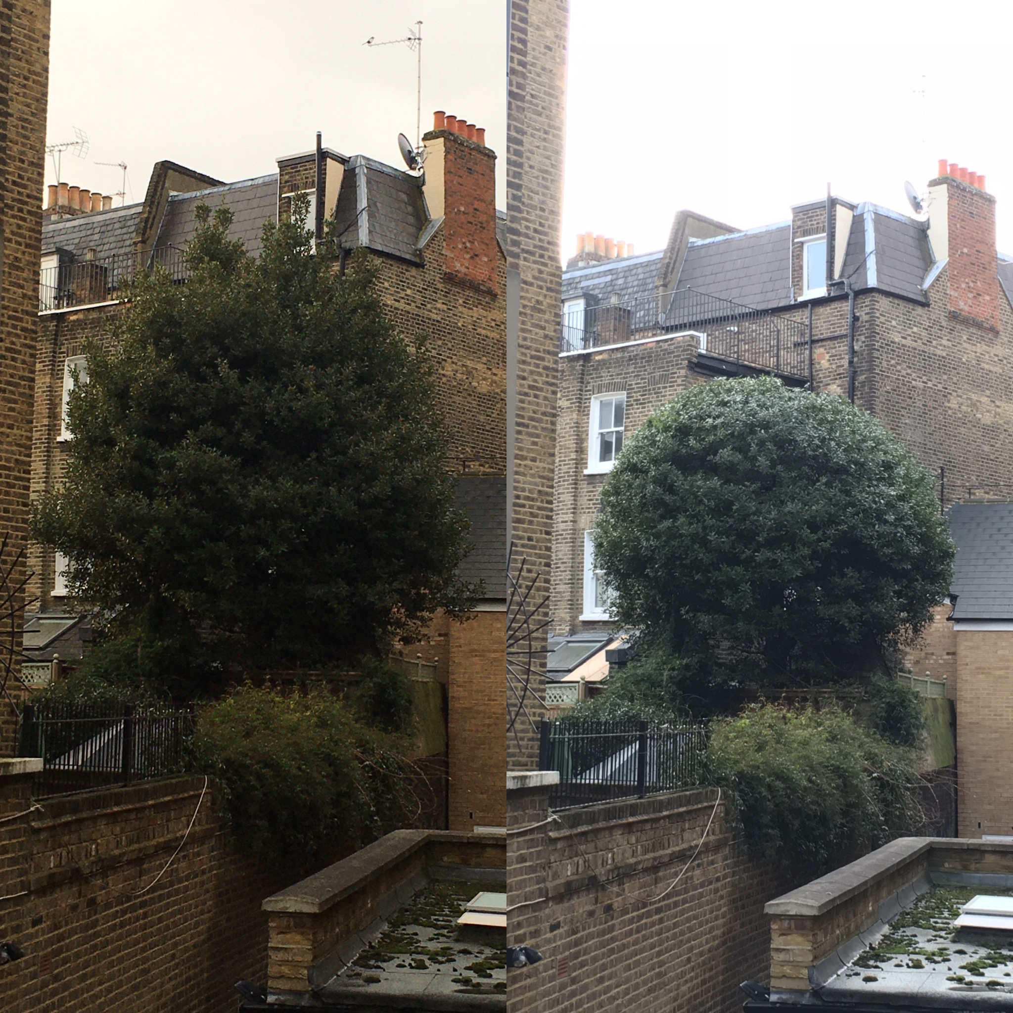 Bay Tree Reduction