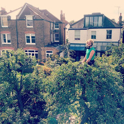 Weeping Apple Tree Reduction