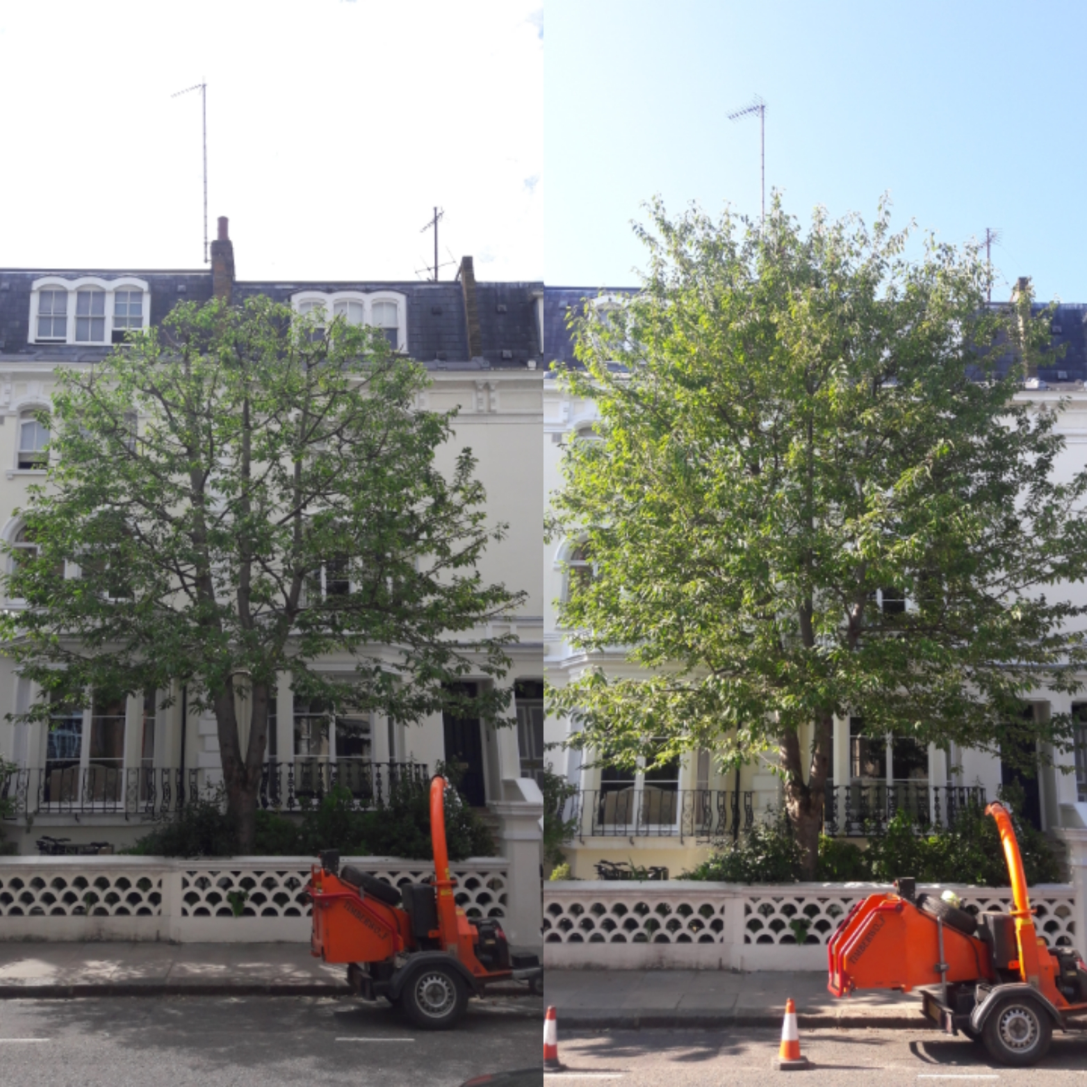 tree pruning | Kensington