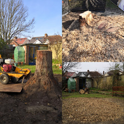 Stump Grinding (Before, during & after)