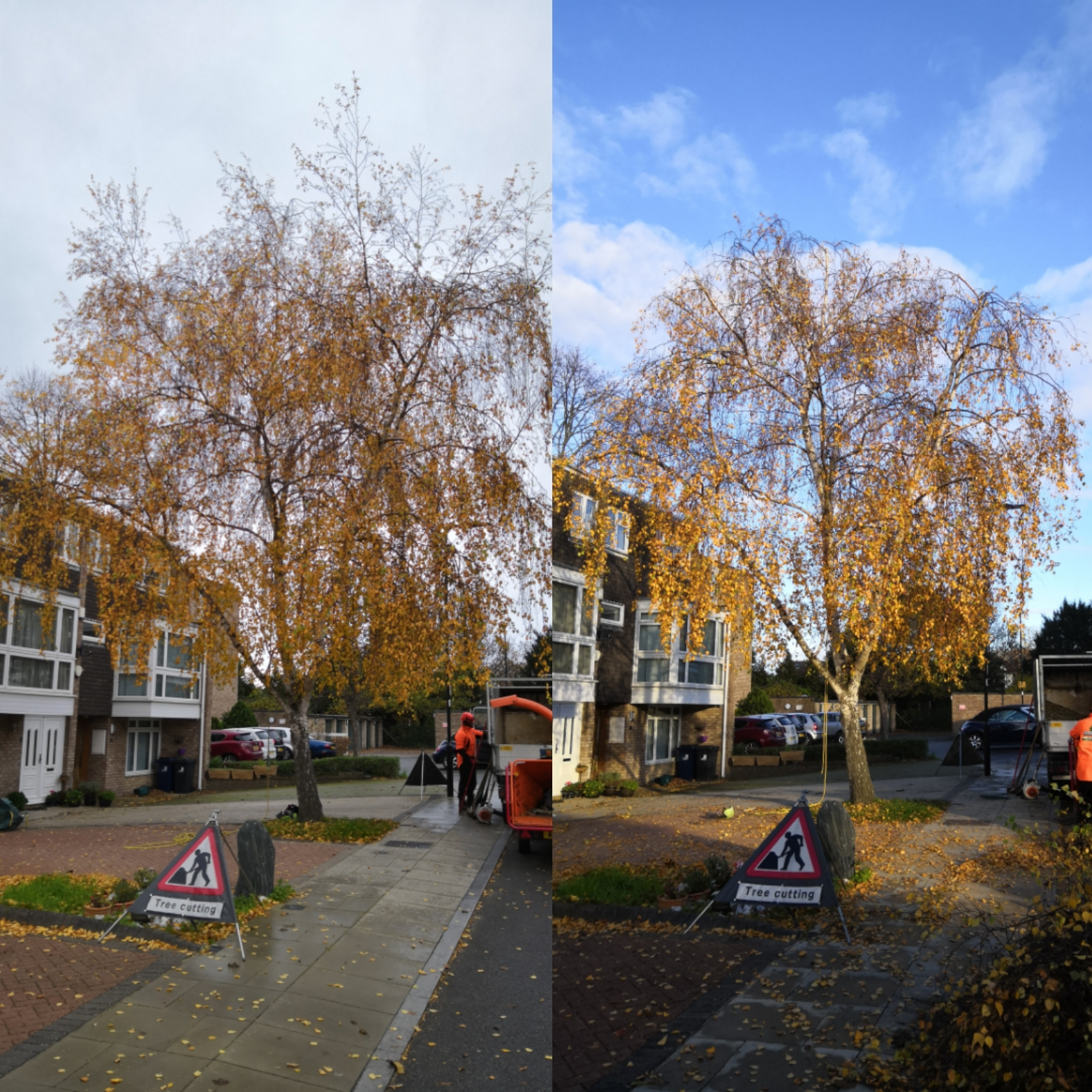 30% Silver Birch Reduction | West L