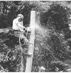 tree pruning | West London