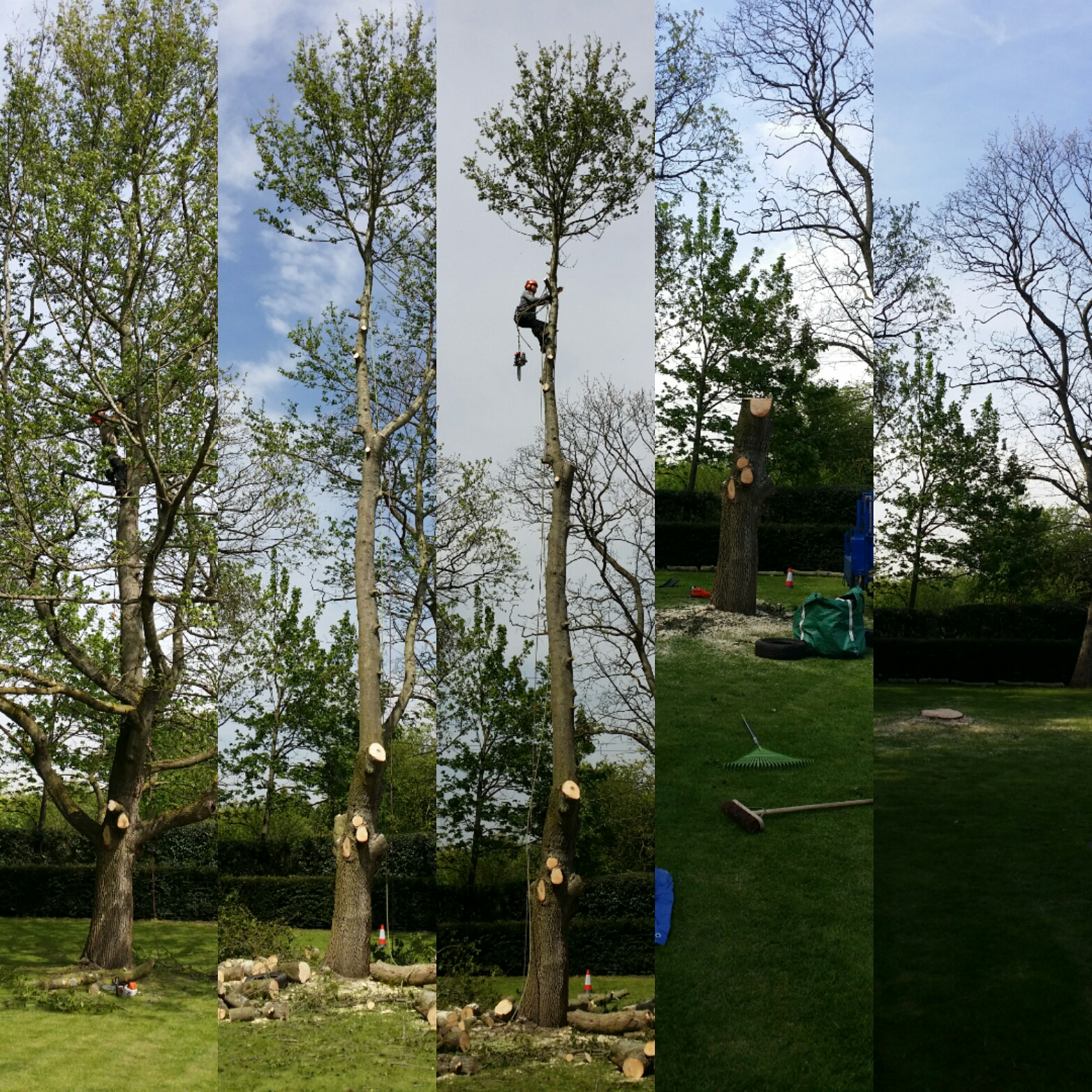 tree surgery | West London
