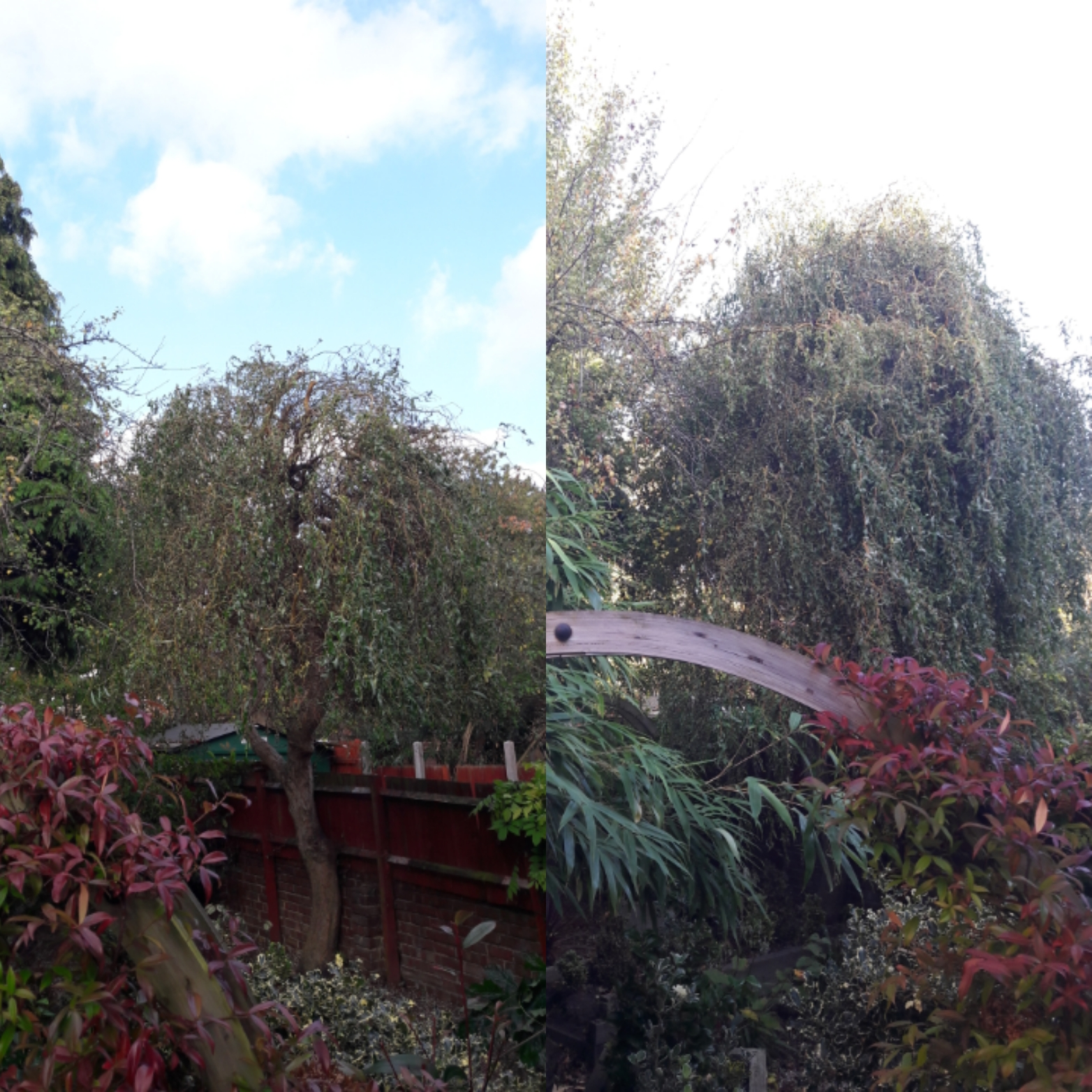 tree pruning | West London