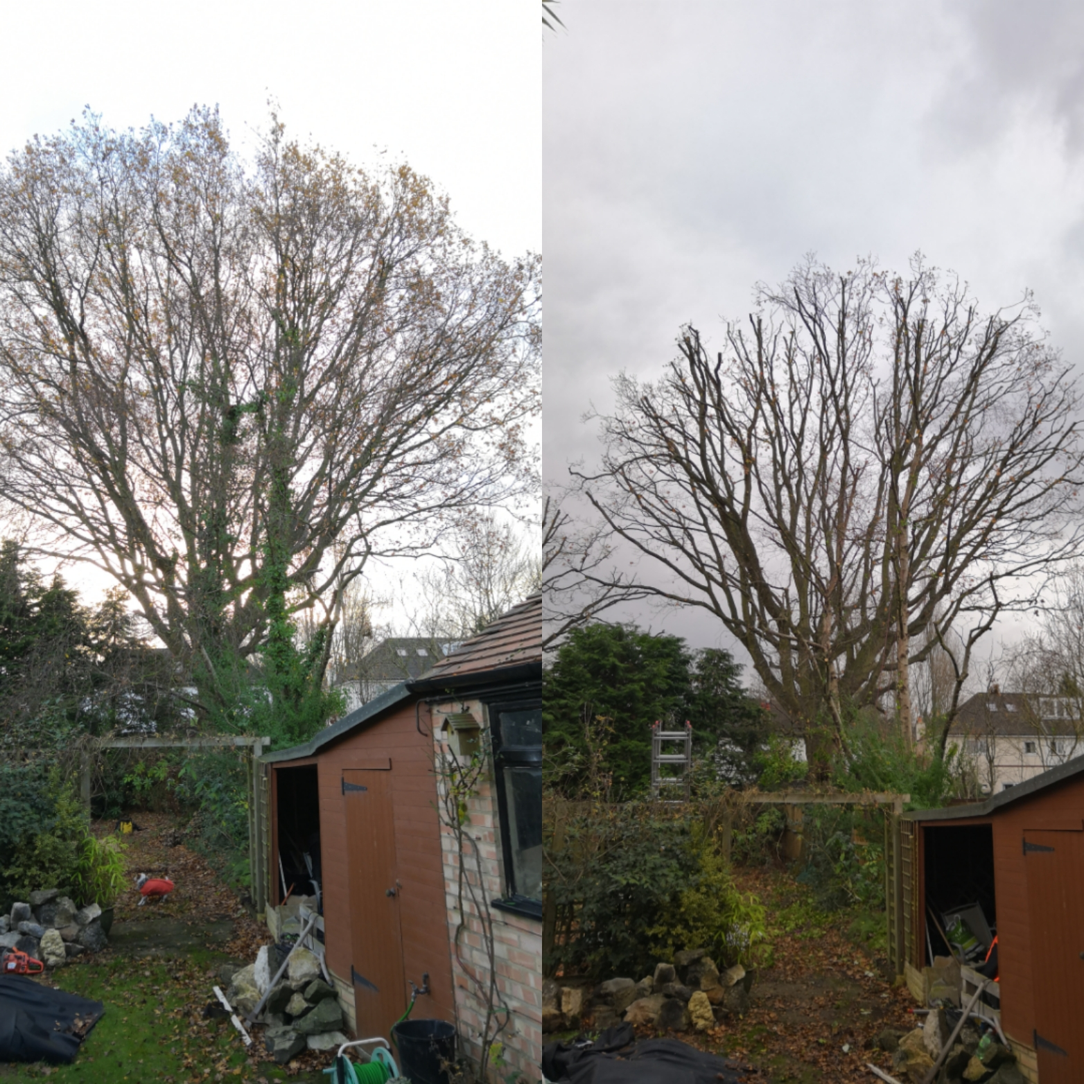 Large Oak reduction | West London