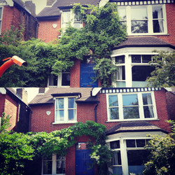Wisteria pruning | West London